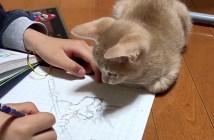 お絵描きを見つめる子猫