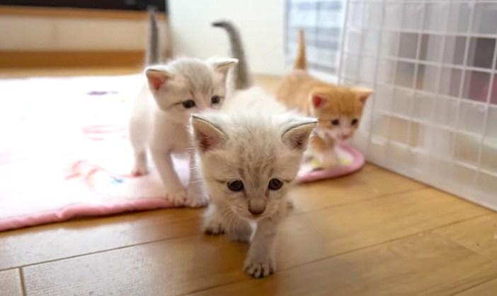 ついて来る子猫達