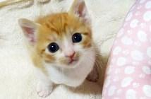 自分の名前を覚えた子猫