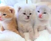 音にピクッと反応するようになった子猫達。優しい女性にいっぱい甘えながら、すくすくと成長していく姿が可愛い♡