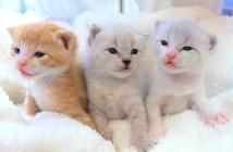 3匹の子猫達