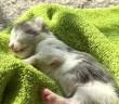 瀕死の状態で保護された子猫