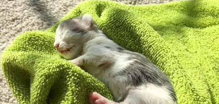 命をつなぐために土や泥まで食べていた子猫。最後まで諦めなかった女性の強い思いが、瀕死の子猫の命を救う!