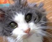 誰にも望まれなかった19歳の老猫。心優しい夫婦が手を差し伸べてくれたのが嬉しくて、幸せいっぱいに喉を鳴らし続ける