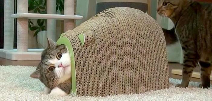 振り向く猫さん