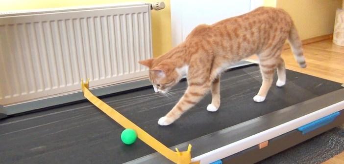 ルームランナーの上を歩く猫