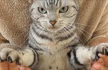爪を切るとどんどん目がすわっていく猫