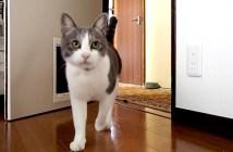呼ぶと現れる猫