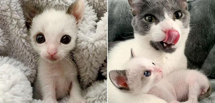 独りぼっちだった小さな子猫。優しい家族との出会いで元気を取り戻すと、病気で閉じられていた瞳に再び輝きを取り戻す!