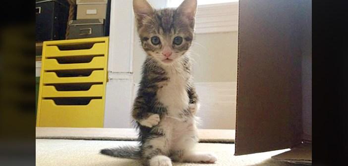 前足に障がいを持つ子猫