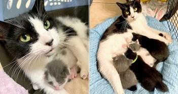 保護猫と子猫