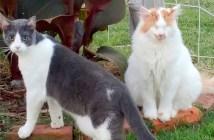 盲目の猫と親友の猫