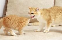 子猫と姉猫