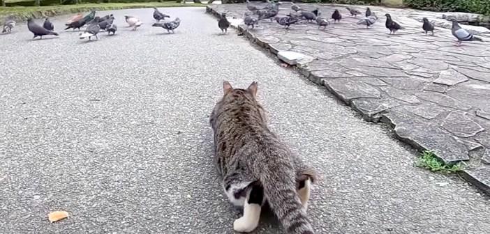 鳩を狙う猫