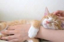 マッサージされる子猫