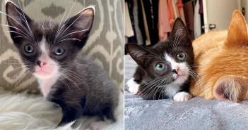 身体が小さかった子猫