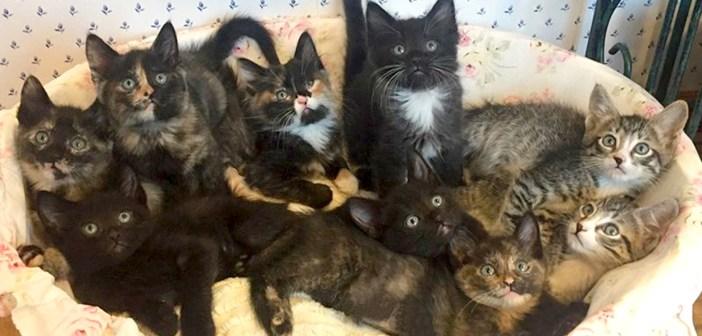 9匹の子猫を生かすため、自分のご飯を与え続けた母猫。倒れていたところを保護されて元気を取り戻すと、幸せいっぱいに