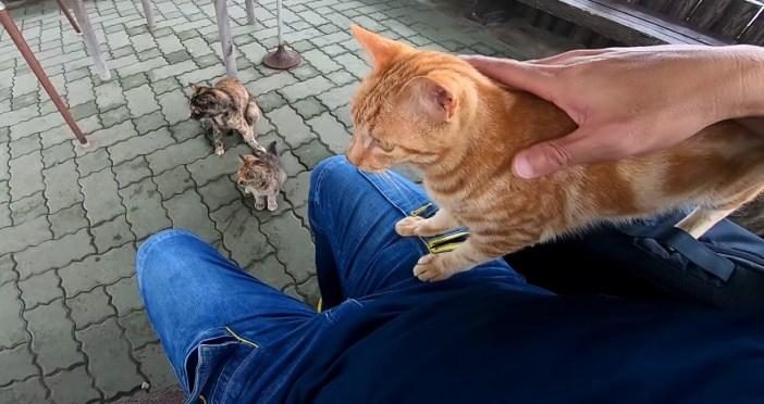 挨拶しにくる猫