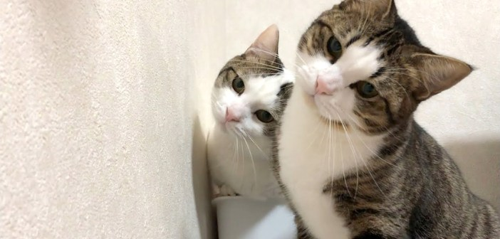 首をかしげる猫達