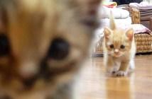 ヨチヨチ歩きの子猫達