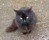 「私を助けて…」路上に置き去りにされて、寂しそうに鳴いていた猫。優しい夫婦に助け出されて、愛のある生活を取り戻す