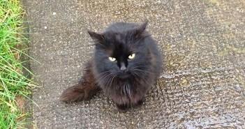 見つめて来た猫