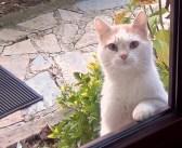 お腹が空くとドアの外に現れる猫さん。家の中をジッと見つめてきて、無言の圧力をかけてきた!