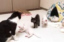 初対面した先住猫と子猫達