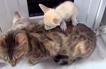 優しい母猫
