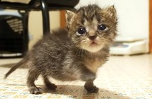 独りぼっちで不安そうな子猫