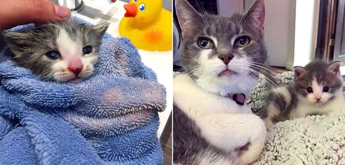 子猫と猫のおばあちゃん