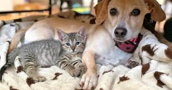 保護子猫と犬