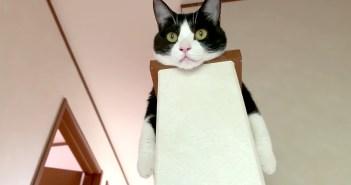 くつろぎスタイルにこだわりのある猫さん。家のあちこちで見せる独特のポーズが可愛すぎて思わず胸がキュンとする♡