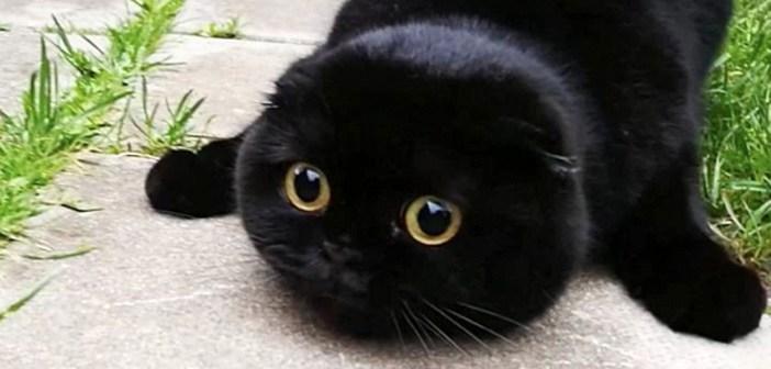 まん丸黒猫