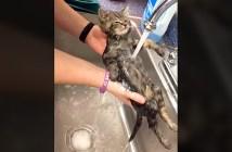 かけ湯された子猫