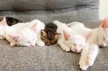 子猫達と赤ちゃん猫