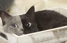 左右に分かれた顔を持つ猫