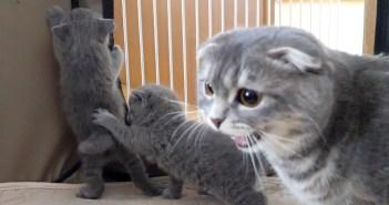 子猫達と母猫