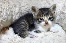 保護されて幸せになった子猫
