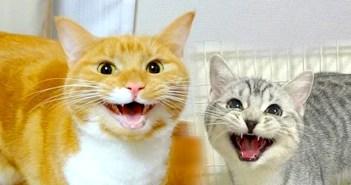 名前を覚えた猫達