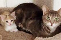 路上から保護された猫の親子