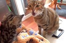 母猫と子猫の会話