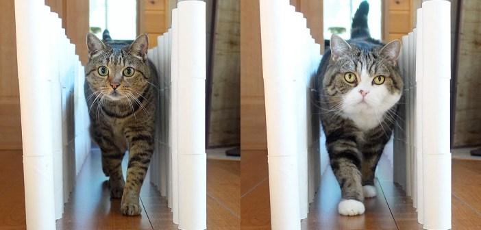 トイレットペーパーの崩れる壁に挑む猫達