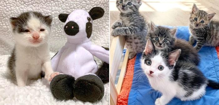 子猫と牛のぬいぐるみ