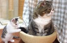 先住猫にちょっかいを出す子猫