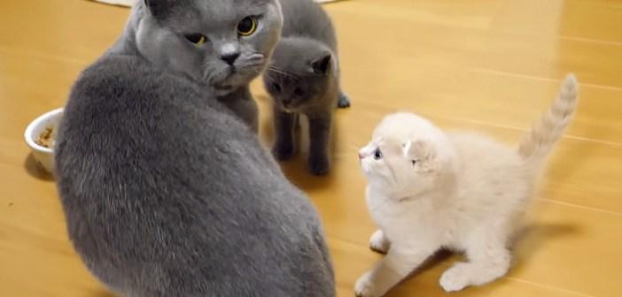 パパ猫と子猫達