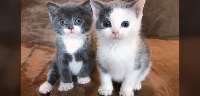 吹雪の中から保護された子猫達