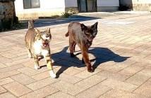 絡んできた猫達