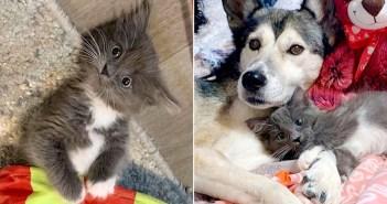 足に障がいのある子猫と犬