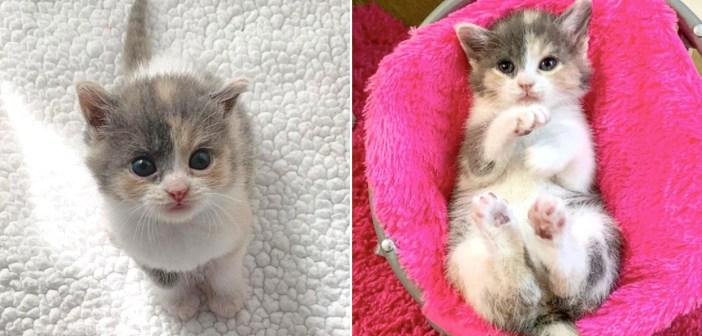 保護直後に毛布をこねることが止められなくなった子猫。迎えてくれた家族の心を可愛すぎるフミフミ姿で鷲掴みに♡